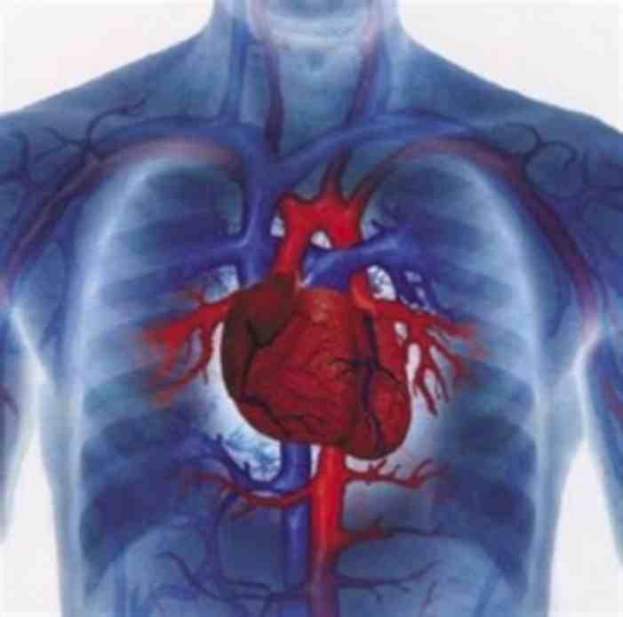 Semana - 1252 - 1 Heart regeneration