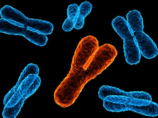 Semana -1418 - 1 Cromosoma