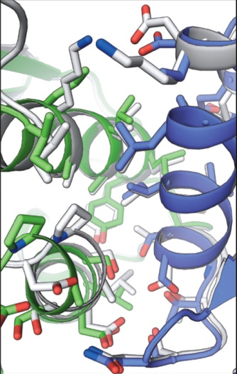 Semana -1423 - 2 Proteínas