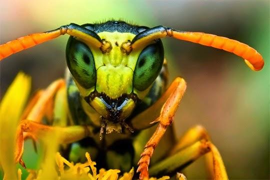 Semana -1446 - 3 Insectos