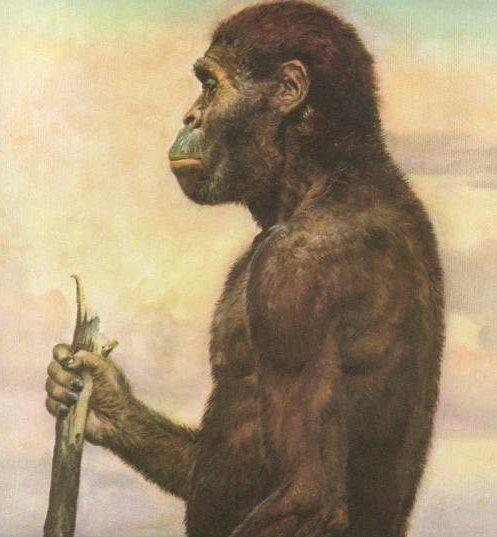 Semana -1505 - 1 A. africanus