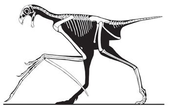 Semana -1520 - 2 Yi Qi Esqueleto