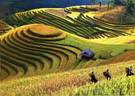 Conocimientos Tradicionales Sistemas Agrícolas